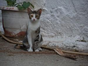 20140906-Katze-DSCN2975